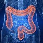 Detoxifierea intestinului gros