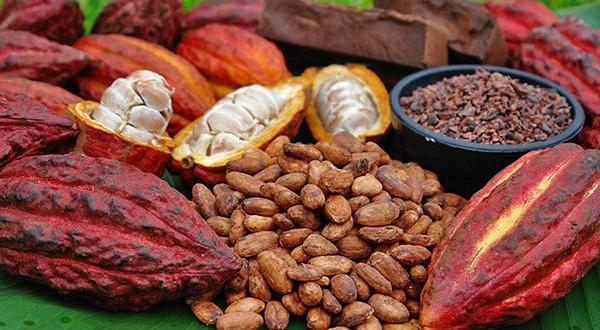 Boabele de cacao – un super aliment