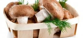 Ciupercile luptă împotriva cancerului și reînnoiesc celulele