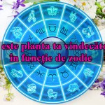 Care este planta ta vindecătoare în funcţie de zodie