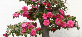 Plante de apartament nepretențioase