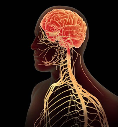 sistemului nervos
