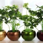 Iluminare artificială pentru plantele de interior