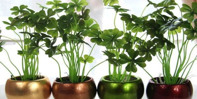 Iluminare artificială pentru plantele de interior – soluția ideală în sezonul rece
