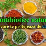 condimente si antioxidanti